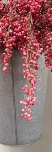 pepperberry in sap bucket crop